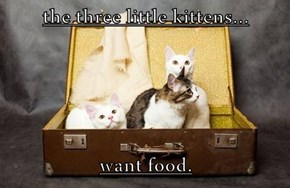 the three little kittens...  want food.
