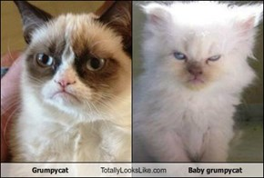 Grumpycat Totally Looks Like Baby grumpycat