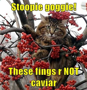 Stoopie goggie!  These fings r NOT caviar