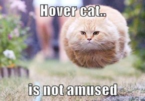 Hover cat..  is not amused