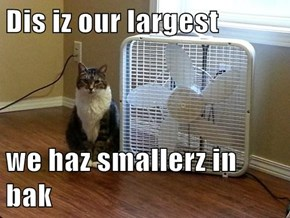 Dis iz our largest  we haz smallerz in bak
