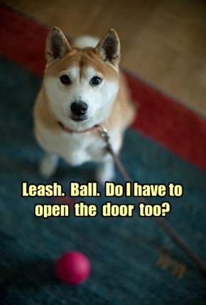 Leash.  Ball.  Do I have to open  the  door  too?