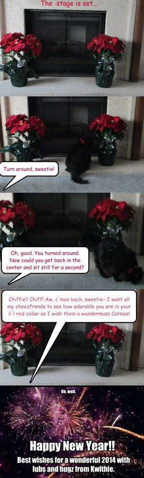 Chiffie's 2013 Catmas Card