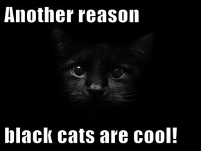 Another reason  black cats are cool!