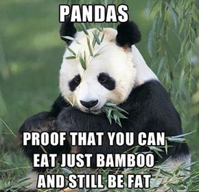 I Guess I Can Forget the 2014 Bamboo Diet...