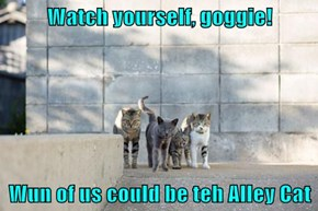 Watch yourself, goggie!  Wun of us could be teh Alley Cat