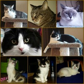 Happy New Year! to all our Cheezfriends. From Simon, Coma, Marti, Chewie, Harley,  Blossom, Bubbles, and Buttercup!