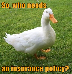 So, who needs  an insurance policy?