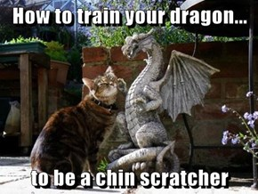 How to train your dragon...  to be a chin scratcher