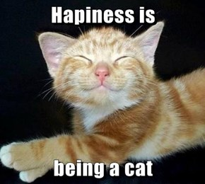 Hapiness is  being a cat