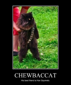 I Wonder if He Makes the Chewbacca Noise