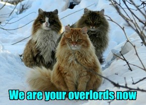Viking Kittehs