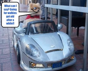 DOGS IN THE FAST LANE!!!