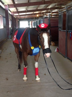 Sad Horse Dressed as Mario
