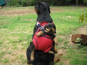 Sometimes It's Just Easier to Carry Them On Your Back