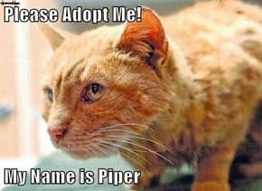 """Piper"" was rescued from an Ohio Pipedrain, has broken leg, Needs  Loving Home"