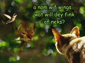 a nom wif wings... wat will dey fink  of neks?