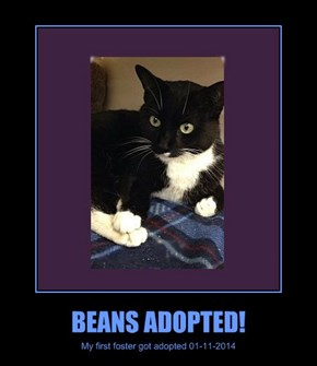 BEANS ADOPTED!
