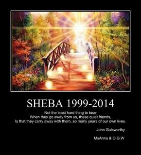 SHEBA 1999-2014