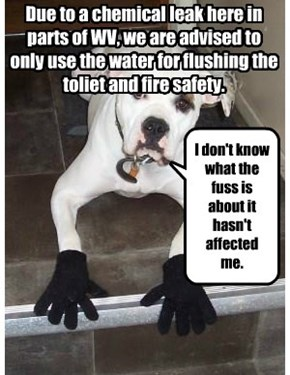 Due to a chemical leak here in parts of WV, we are advised to only use the water for flushing the toliet and fire safety.