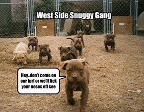 West Side Snuggy Gang