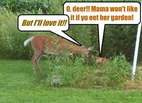 O, deer!! Mama won't like it if yu eet her garden!