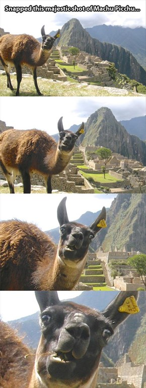 I Machu You Up and Spit You Out!