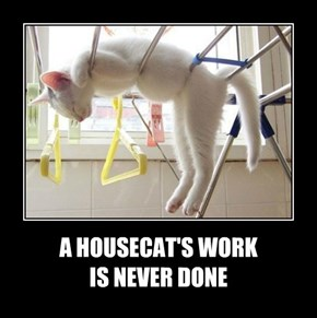 A HOUSECAT'S WORK  IS NEVER DONE