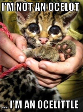 Quite an Ocelot of Cuteness!