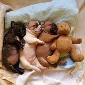 Everyone Needs a Snuggle Buddy