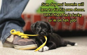 Sum day mai hoomin will lern to tie his own shooz. Until then, he's lucky ai'm on teh job!