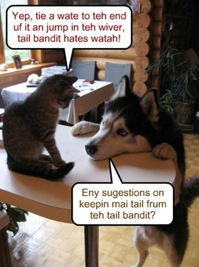 Eny sugestions on keepin mai tail frum teh tail bandit?