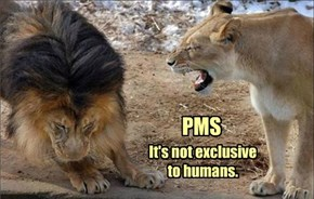 PMS. It's not exclusive to humans.