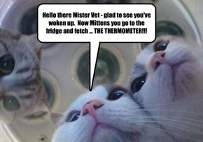Hello there Mister Vet - glad to see you've woken up.  Now Mittens you go to the fridge and fetch ... THE THERMOMETER!!!