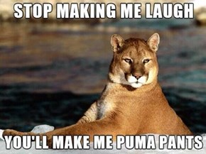 This is How Mountain Lions Look When They Laugh...