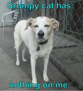 Grumpy cat has      nothing on me.