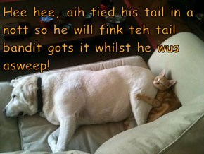 Hee hee, aih tied his tail in a nott so he will fink teh tail bandit gots it whilst he wus asweep!