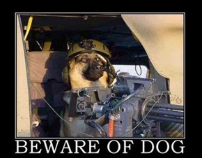 Dogs Are Well Armed Nowadays