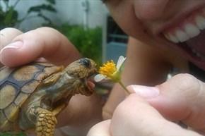 I Chomp You, Flower!