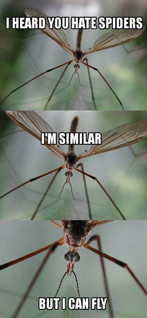 Crane Flies Are Like Spiders With Wings