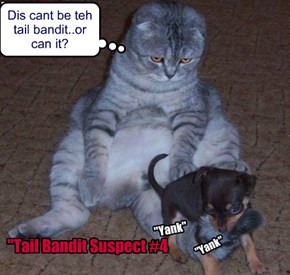 Dis cant be teh tail bandit..or can it?