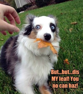 But...but...dis MY leaf! You no can haz!
