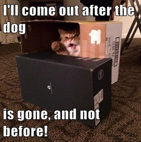 I'll come out after the dog  is gone, and not before!