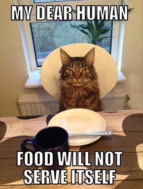 "I Don't Care if YOU""RE Hungry, Human!"