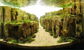 This Incredible Landscape is Actually an Aquarium