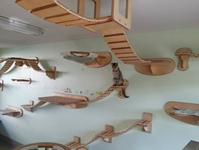 Look at This Cat of the Day: Custom Built Cat Structures With Style