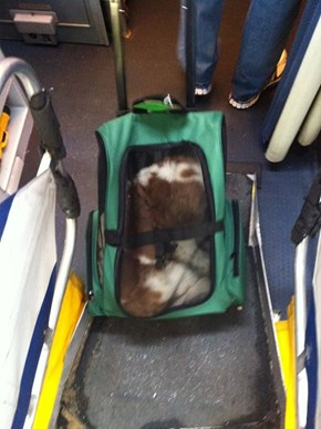 Sir, That Bag of Dog Will Have To Fit Under Your Seat!
