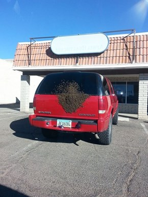 Forget it, This Car Belongs to the Bees Now