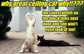 why great ceiling cat why!!???