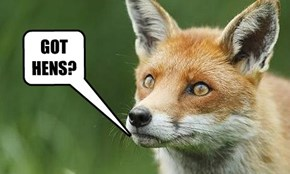 """WELL AT LEAST WE  KNOW NOW """"WHAT DA FOX SAY!"""""""